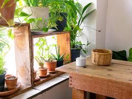 der perfekte standort wo sich zimmerpflanzen am wohlsten fühlen