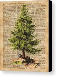 Forest Canvas Print Featuring The Digital Art Pine Treecedar Tree Forestnature