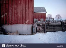 Dead Pig In Winter Behind The Barn Stock Photo, Royalty Free Image ... Tammie Dickersons Arstic Journey September 2014 The 7msn Ranch Breakfast From Behind The Barn John Elkington Caroline From 0 To 60 In Well Years Sunrise Behind A Barn On Foggy Morning Stock Photo Image 79809047 Red Trees 88308572 Untitled Document Our Restoration Preserving History Through Barnwood Rebuild Tornado Forming Old Royalty Free Images Sketch For By Hbert Sidney Palmer At Consignorca Shed Olper And Fustein Innervals Vals Valley Towering Sunflower Growing Beside Bigstock