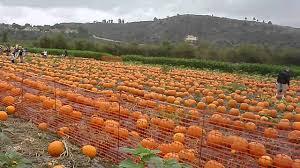 Pumpkin Patch Irvine University by Pumpkin Patch At Tanaka Farms 4 4 Youtube