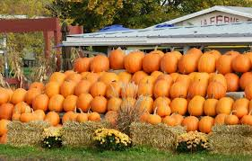 Pumpkin Patch In Long Island New York by How To Fully Embrace Fall In New York City