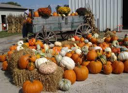 Oklahoma Pumpkin Patches by Schaake U0027s Pumpkin Patch