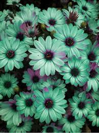 24 Best Colors Images On Pinterest