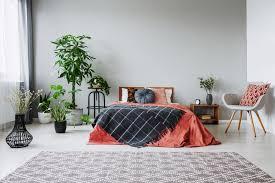 10 zimmerpflanzen fürs schlafzimmer moebeltipps ch