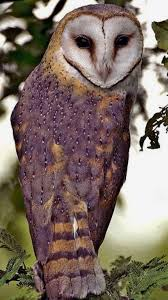Barn Owl / Chouette Effraie | OWLS | Pinterest | Owl, Bird And Animal 382 Best Barn Owls Images On Pinterest Barn Owl Photos And Beautiful My Sisters Favorite It Used To Be Mine Pin By Hans De Graaf Uilen Bird Animal Totem Native American Zodiac Signs Birth Symbolism Meaning Dreams Spirit 1861 Snowy Saw Whets 741 Owls Birds 149 Animals 2 Snowy Owl Necklace Ceramic Pendant The Goddess Touch Animism Youtube Pole Trollgirl Deviantart