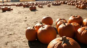 Denver Area Pumpkin Patches by Your Guide To Denver Area Corn Mazes And Haunted Events Mile