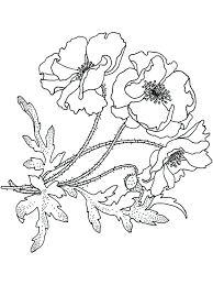 California Poppy Coloring Page Flower Pages Drawing Of