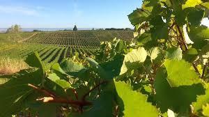 chambre agriculture aude la chambre d agriculture cultive la vigne de demain au domaine de