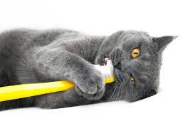 cat dental care events uniquely cats veterinary center