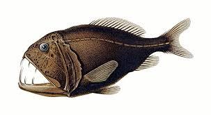Vampire Clipart Fish 2