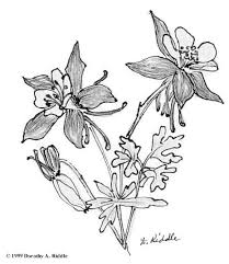 Columbine Flower Sketch