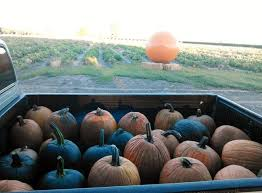 Pumpkin Patch Fresno Clovis by Places To Go Single Palm Pumpkins