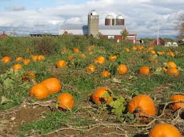 Highwood Pumpkin Fest Hours by Halloween In Chicago Fun For Everyone The Clare