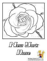 New York State Flower Coloring Page Usa