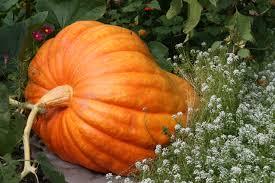 Peter Pumpkin Patch Petaluma by California Colors Fall At Mcevoy Ranch In Petaluma Gardenista