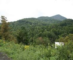 Christmas Tree Farms In Boone Nc by Christmas Tree Farms Around Asheville Nc Best Images Collections