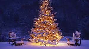 Beautiful Outdoor Christmas Tree 01