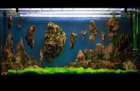 Allestimento Acquario Fantasy - Aquarium Setup - Aquascape ... How To Set Up An African Cichlid Tank Step By Guide Youtube Aquascaping The Art Of The Planted Aquarium 2013 Nano Pt1 Best 25 Ideas On Pinterest Httpwwwrebellcomimagesaquascaping 430 Best Freshwater Aqua Scape Images Aquascape Equipment Setup Ideas Cool Up 17 About Fish Process 4ft Cave Ridgeline Aquascape A Planted Tank Hidden Forest New Directly After Setting When Dreams Come True