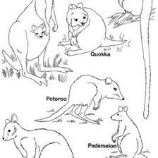 Australian Animal Template Templates