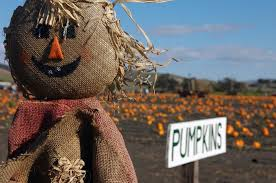 Snohomish Pumpkin Patch by 6 Craven Farm Snohomish Wash From The 10 Best Pumpkin Patches