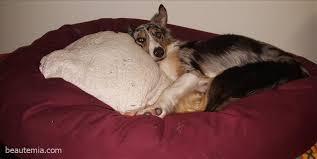 gift ideas pet beds