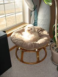 Hanging Papasan Chair Frame by 51 Best Just Too Cute Images On Pinterest Papasan Chair So