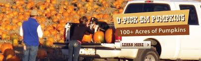 Pumpkin Patch Glendale Co by Corn Maze Pumpkin Patch Activities For Denver Colorado