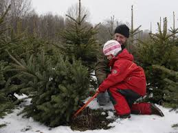 75 Douglas Fir Artificial Christmas Tree by Top Places To Buy Your Christmas Tree And Decorations Around