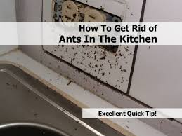 How To Get Rid Ants In The Kitchen
