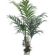 plantes vertes d interieur plantes d intérieur vertes photos de magnolisafleur