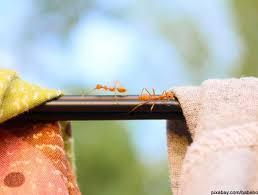 die besten und effektivsten hausmittel gegen ameisen in der