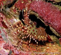 Decorator Crabs And Sea Sponges by The Best Small Fish And Critters In The Ocean Sport Diver