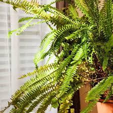 zimmerpflanzen schlafzimmer muss versuchen gesunde