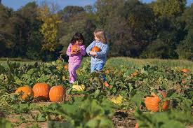 Best Pumpkin Picking Bergen County Nj by Self Pick Farms Abound In New Jersey Here U0027s Where To Go For Fresh