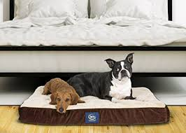 Serta Dog Bed top 7 best serta dog bed reviews your perfect match 2017