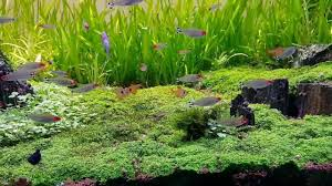 Aquascaping 800l Tank – Caridina Japonica – Amano Shrimp ... Aquascaping Aquarium Ideas From Aquatics Live 2012 Part 2 Youtube How To Make Trees In Planted Aquarium The Nature Style Planted Tank Awards Ultimate Shop In Raipur Fuckyeahaquascaping My 90p Tank One Month See Day 1 Here Best 25 Ideas On Pinterest Home Design Designs Aquascape Happy Journey By Adil Chaouki 1ft Cube Aquascaping Fuck Yeah Anyone Do For Your Fish Srt Hellcat Forum Archives Javidecor