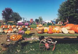 Pumpkin Patch Indiana County Pa by Russell Farms Pumpkin Patch Country Fall Festival