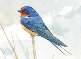 Barn Swallow Watercolor Print 5x7, Bird Art | David Scheirer ... Barn Swallow Sitting On A White In Sumrtime Stock Photo Swallow Watercolor Print 5x7 Bird Art David Scheirer Wooden By Limitlessendeavours On Deviantart Birding Is Fun The Beloved Character Concept Pilot Illustration Project Barn Barnstorming Swallows Make Their Return To New Hampshire Birds Of York Larks And Kinglets Cool Facts About Small With Forked Tails Hirundo Rustica Male Lake Washington Union Bay Seattle Usa Feather Tailed Stories