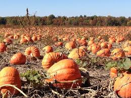 South Reno Pumpkin Patch by Visit Pumpkin Patches In Okc