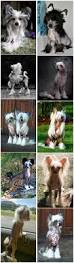 Non Shedding Small Dog Breeds List by Top 15 Cutest Small Dog Breeds Dog Breeds Dog And Doggies