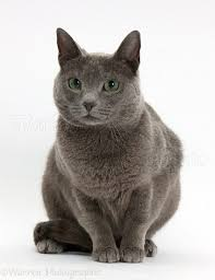 russian cat names cat names archives am7to7 am7to7