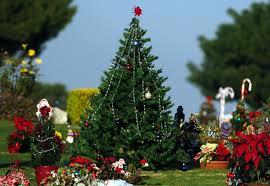 Christmas Decorations Line Grave Sites At Green Hills Memorial Park Dec 14 2004