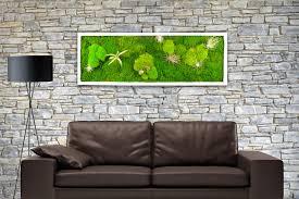 pflanzenbild kaufen moosbild mit lebenden pflanzen wandbild moos wanddeko poster rechteckig schwarz 60x30 cm