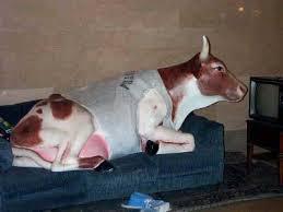 pics kuh auf dem sofa vor dem fernseher