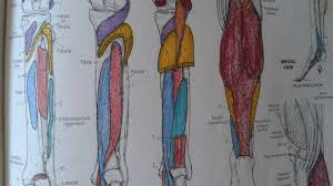 The Anatomy Coloring Book New Muscles Fantastisch Human And
