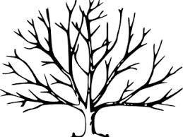 Leafless Tree Coloring Page With No Leaves Clip Art At Clker
