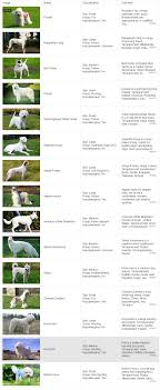 100 non shed dogs ireland list of dogs that don u0027t shed