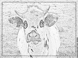 Dessin De Pages à Colorier Coloriage Vache Technical Design