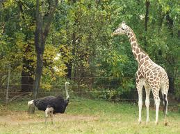 Bronx Zoo Halloween 2014 by Animals Archives Italian Mamma