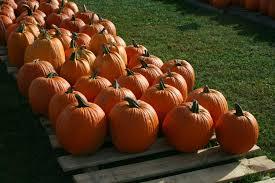 Pumpkin Patch Visalia Ca Hours by Bengtson U0027s Pumpkin Patch Hours In Visalia